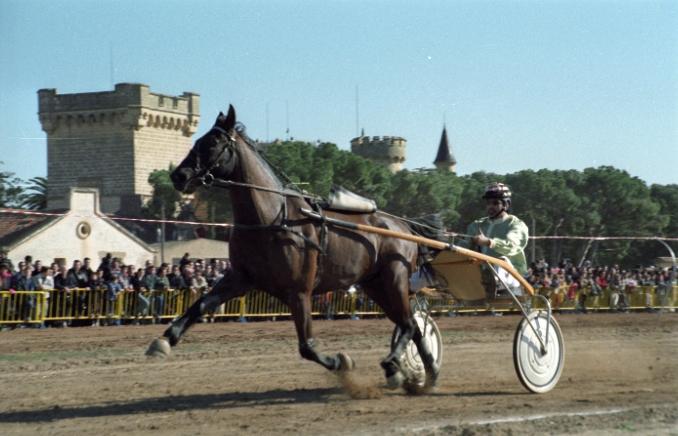 cavalls.01.jpg
